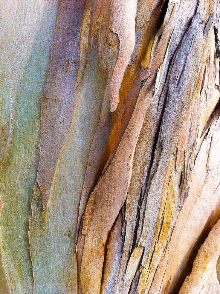 Sven Anderson, Tree Bark