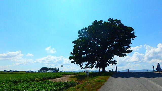セブンスターの木 #北海道