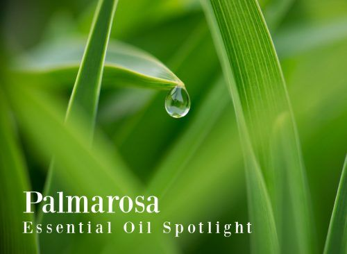 Palmarosa Essential Oil - The Aromahead Blog