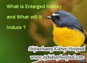 What is enlarged kidney and what will it induce ? You know, as the kidney disease developed, the symptoms will be induced one by one, and some of the kidney disease patients will suffer enlarged kidney.