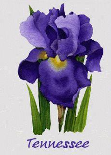 Tennessee S State Flower Beautiful Iris