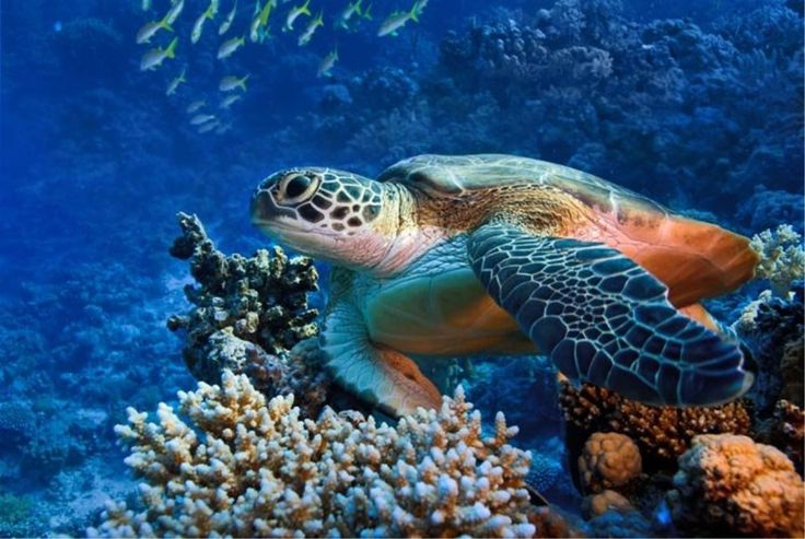 Afbeeldingsresultaat voor tropische vissen