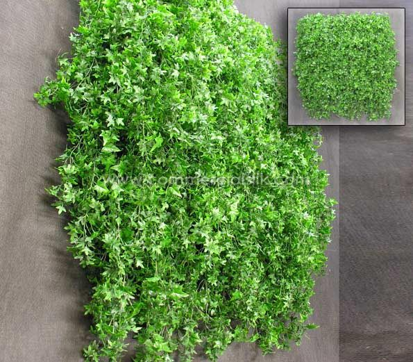 Wall Ivy For Outdoors Outdoor English Ivy Vertical Garden