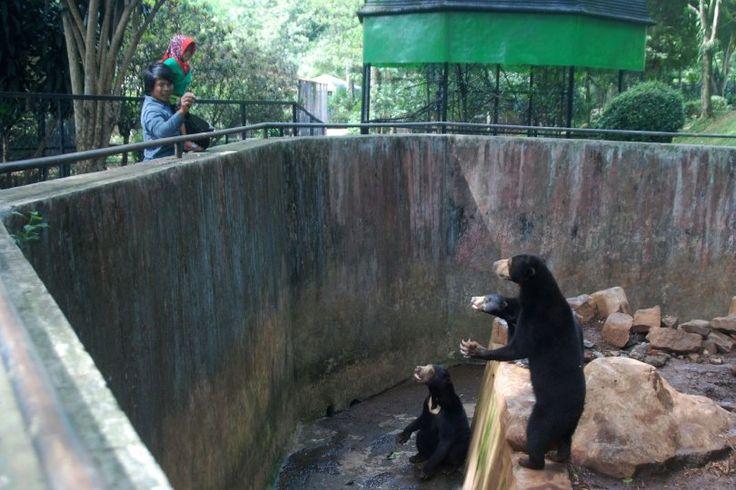 #Hayvanlar için cehennem, onları köleleştiren bir ticarethane: Hayvanat bahçeleri https://gaiadergi.com/hayvanlar-icin-cehennem-onlari-kolelestiren-bir-ticarethane-hayvanat-bahceleri/?utm_content=buffer9d663&utm_medium=social&utm_source=pinterest.com&utm_campaign=buffer