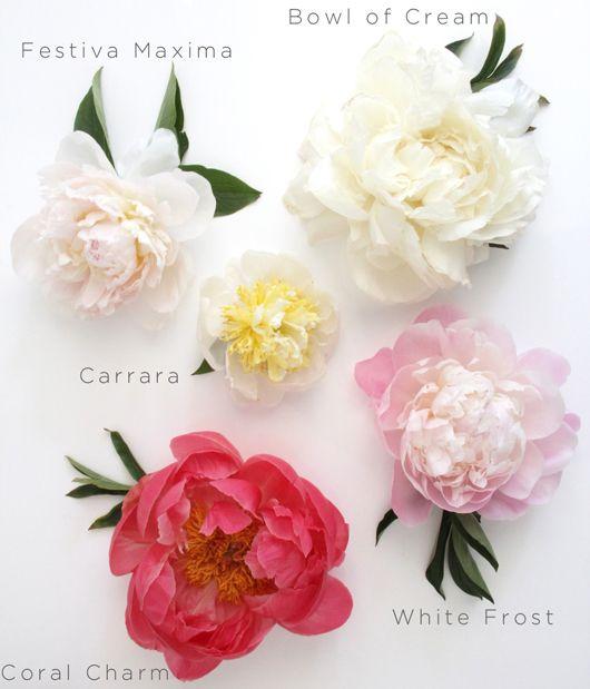 Flowers ~ Peonies & Roses