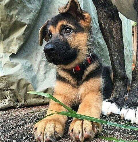 So cute baby Photography by @Mygsdcane #About_animalslife