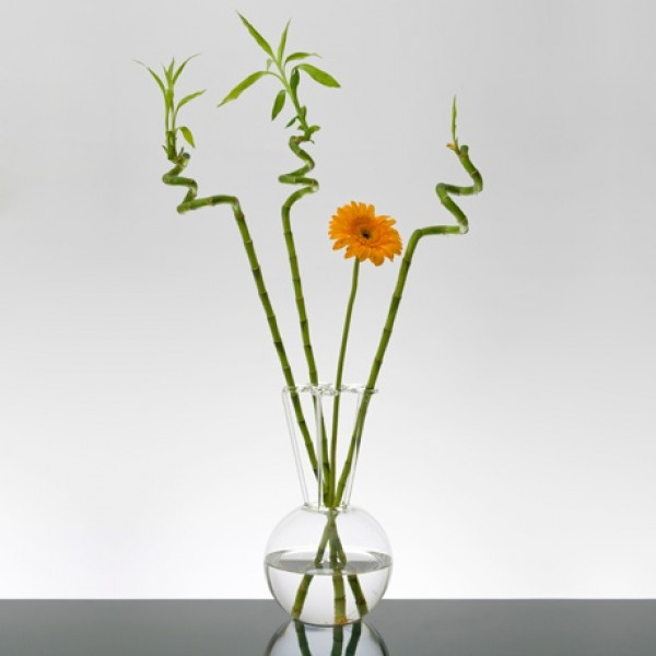 Oltre 25 fantastiche idee su fiori recisi su pinterest for Bambu in vaso acqua