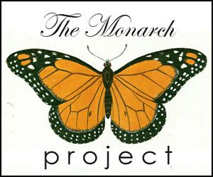 How to Raise a Monarch Butterfly Part I of V | The Art of Doing Stuff