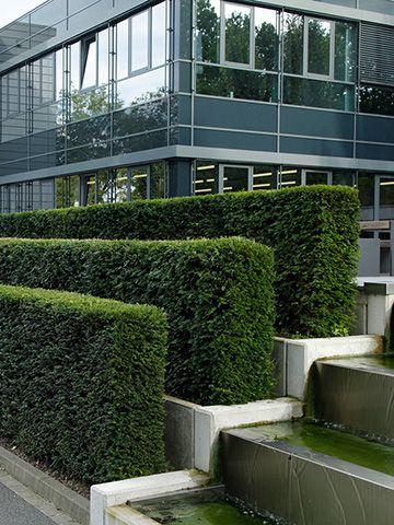 Lovely Gr ne Taxuswellen binden den Gewerbe Neubau in seine Umgebung ein Die edle Edelstahl