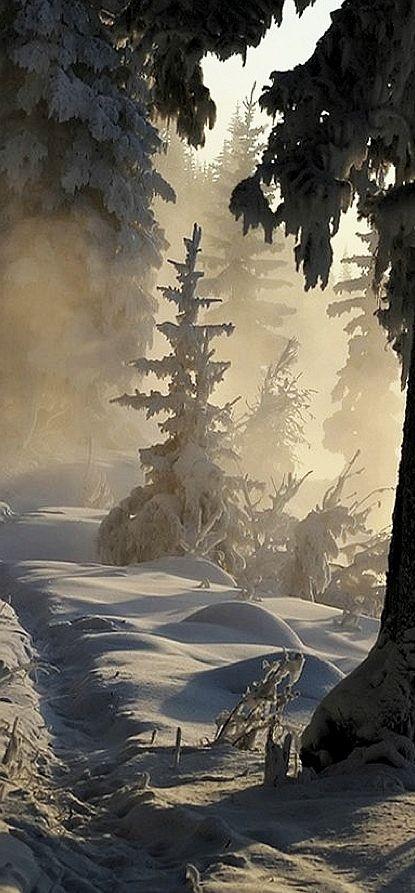 Winter Trail - Ottawa, Canada