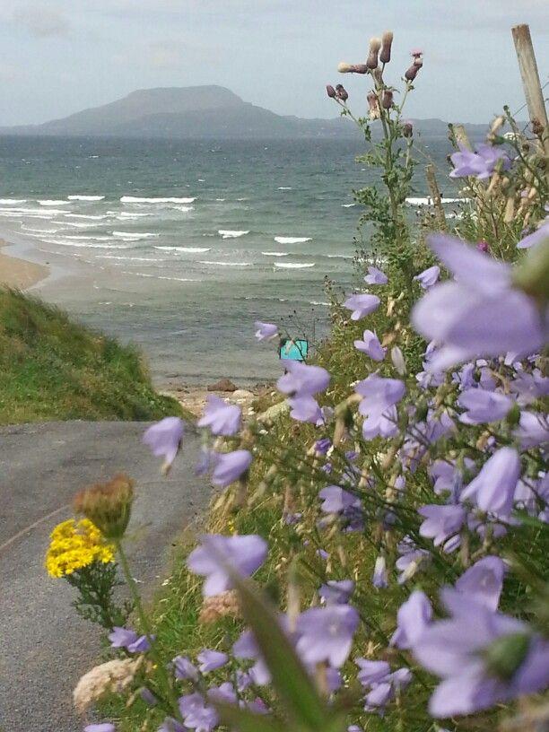 Hair bells. Looking towards Clare island from Bunowen, Louisburgh, County Mayo.