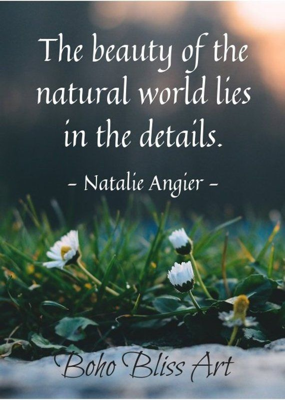 The Beauty Of The Natural World Lies In The Details Quote By Natalie Angier Nature Quote Wall Art Mother Nature Quotes Nature Quotes Natural Beauty Quotes