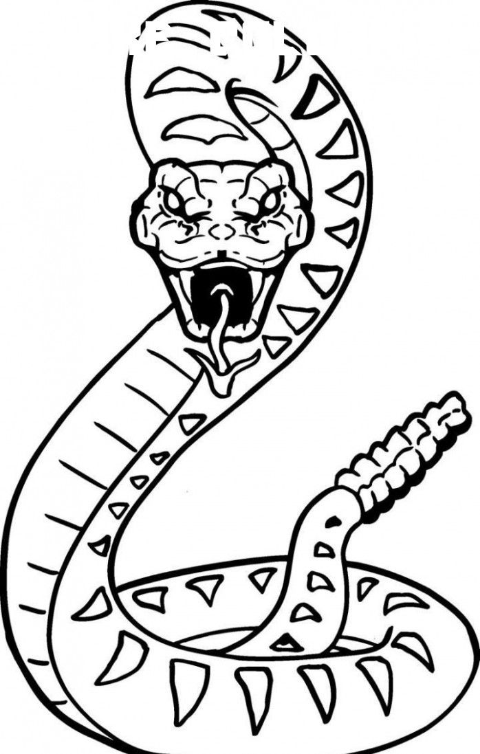 6 Snake Coloring Snake Coloring Pages Snake Drawing Snake Coloring Page