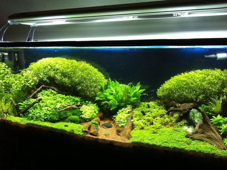 iluminacin acuario plantado