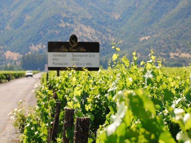 Ruta del Vino of Colchagua Valley, #Colchagua