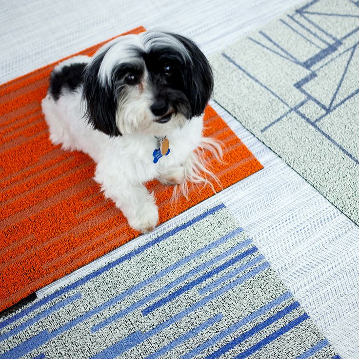 Behind the scenes - Our office pup Skooter showing off some shag mats we are currently designing.