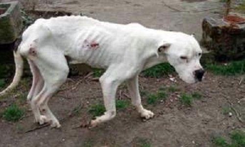 Pétition : Pour des sanctions sévères en cas de maltraitance sur les animaux et leur mise en application ! juin 2016
