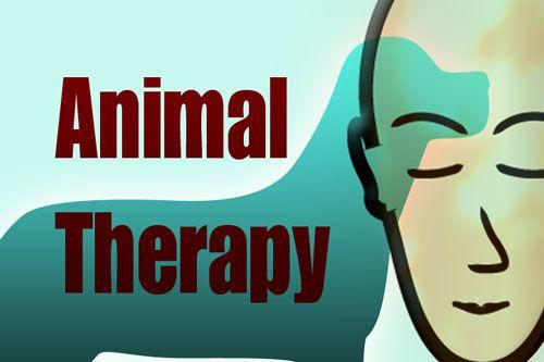 Terapia asistida con animales. http://bozaudc.wordpress.com/2014/03/14/terapia-asistida-con-animales/