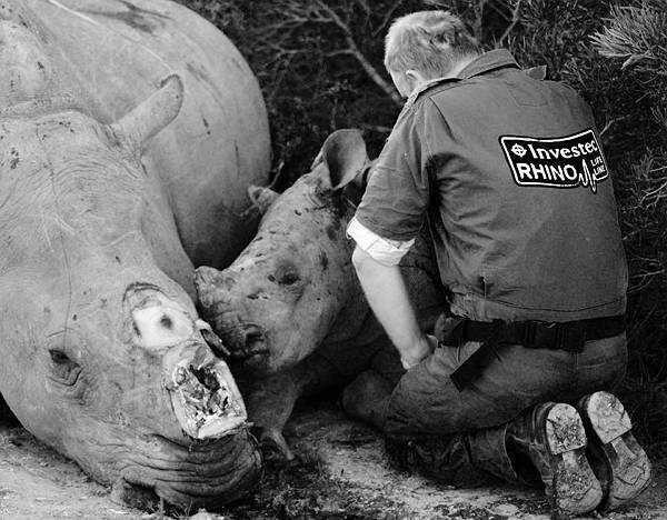 엄마 따라 살해된 아기 코뿔소에 무릎 꿇은 수의사 | Daum 루리웹