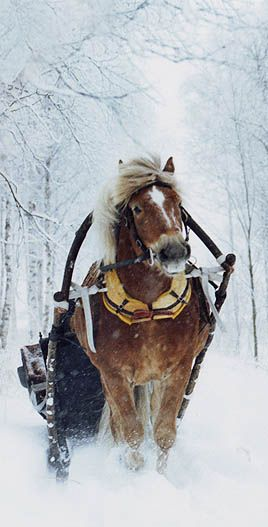 The only navigable road near Pi's Cottage sees only horse drawn traffic. In the winter, when all is quiet, we can hear the bells on the sleighs when they pass.