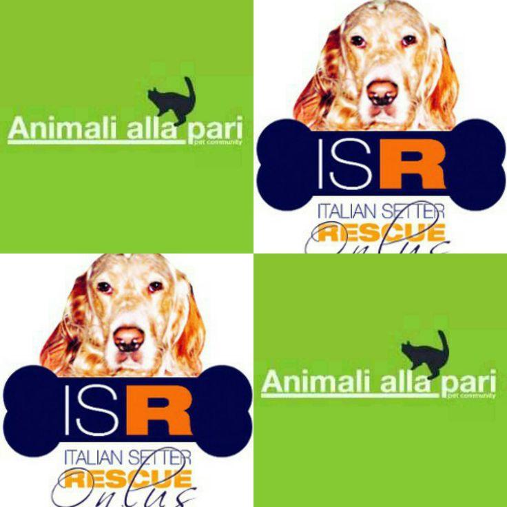 Adozioni cani: nel blog di Animali alla le pubblicazioni d'Italian Setter Rescue,che opera salvandoSetter Inglesi dalle situazioni di difficoltà.