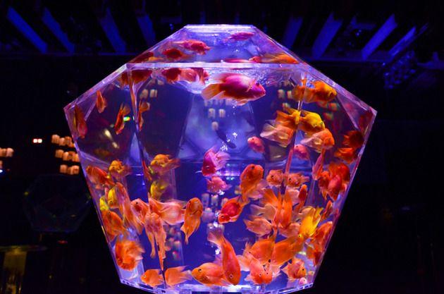 5千匹の金魚が泳ぐ「アートアクアリウム展」東京・日本橋で開催 | excite ism | 2012年08月29日 | Fashionsnap.com