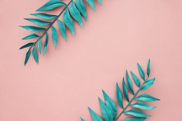 Download Beautiful Blue Border Leaves On Pink Background For Free Pink Wallpaper Pc Pink Background Wallpaper Notebook