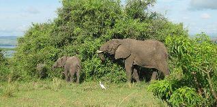 ¿Nueva ley de marfil podría salvar a los elefantes?