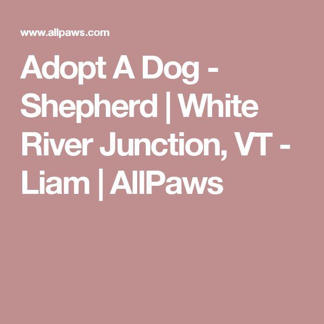 Adopt A Dog - Shepherd   White River Junction, VT - Liam   AllPaws