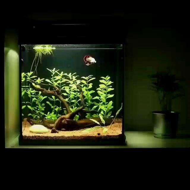 Simple Nano Betta Tank Setup In 2020 Betta Tank Fish Tank Betta Aquarium