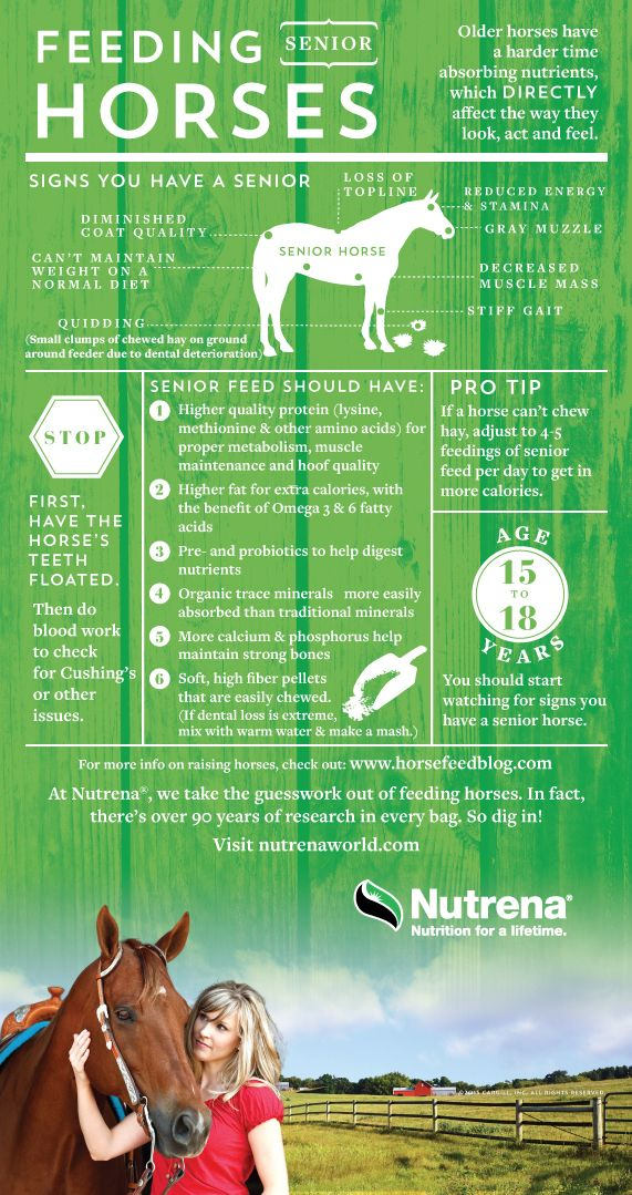 Senior horse care tips from AQHA Corporate Partner Nutrena. These horse health tips will help you identify the signs that your older horse needs a diet change.