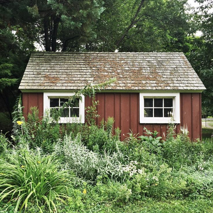 An overgrown gardening shed always is a heart warmer, isn't it?