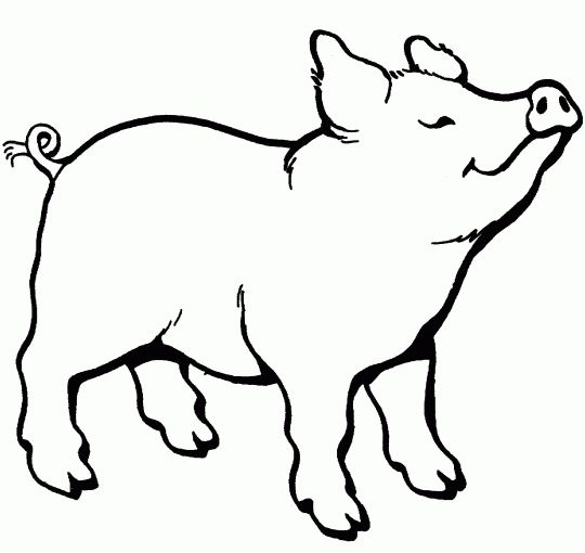 Pig Animal Coloring Book