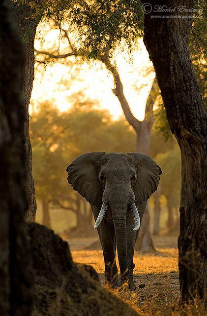 .beautiful animal