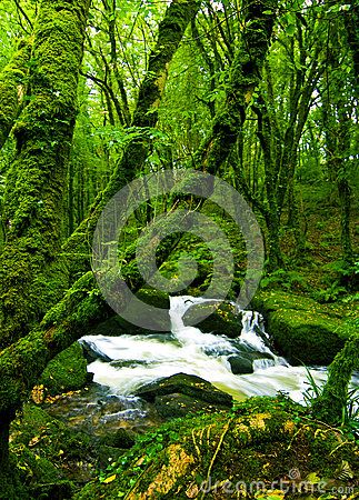 Stream flowing over rocks in leafy green moss covered forest,