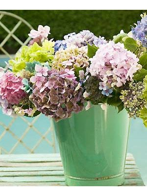 How to dry hydrangeas: Pick flowers when in full bloom, ideally nearer to the end of their season when the stems have become stiff and woody, and the flower heads are firmer. Stand them in a vase in  roughly 1cm of water in a spot where the air circulates freely. Allow the water to evaporate, so that the heads can dry slowly – this should take around six weeks.    Create closely packed bunches and tie the stems with stringDry Hydrangeas, Flower Art, Flower Head, Pick Flower, Hydrangeas Flower, Drying Hydrangeas