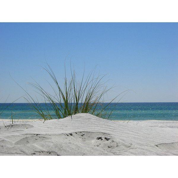 Beach Grass, By Cincobayou, Beach, Grass, Sand, Ocean