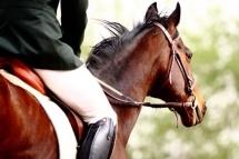 Deal Torino-Andare a Cavallo costa caro ? Non con il Centro Ippico Montanarese Le Querce !  3 lezioni di equitazione da un'ora per una o 2 persone con istruttori FISE a partire da 19 €