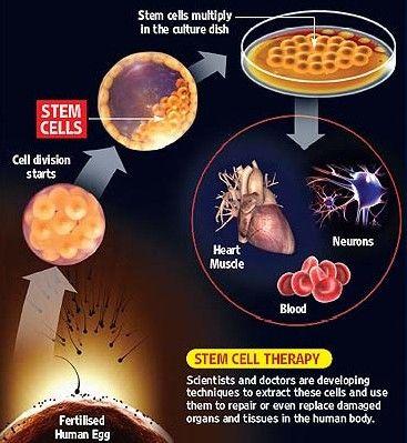 Celulas madre multipotentes