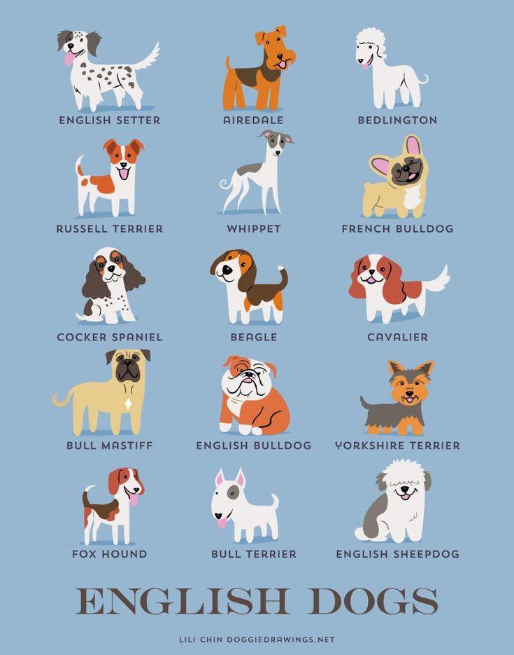 Setter inglês, Airedale terrier, Bedlington terrier, Jack russell terrier, Whippet, Buldogue francês (França e Inglaterra), Cocker spaniel inglês, Beagle, Cavalier king charles spaniel, Bulmastife, Buldogue inglês, Yorkshire terrier, Foxhound inglês, Bull terrier e Pastor inglês são raças BRITÂNICAS