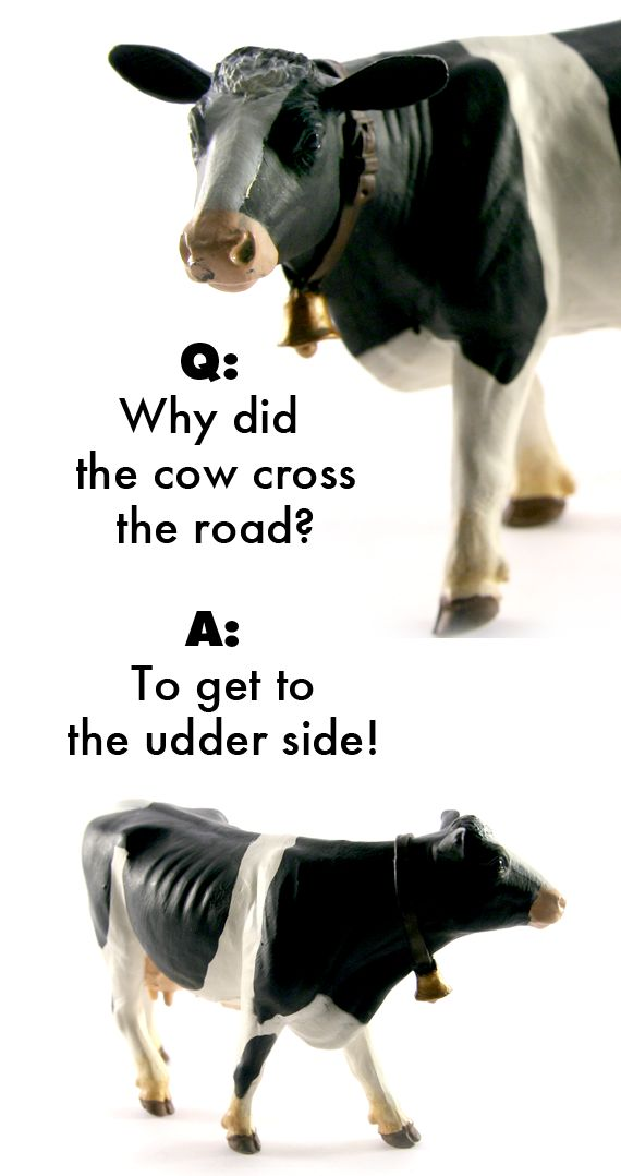 A cow toy tells a cow joke. TheWildAnimalStore.com