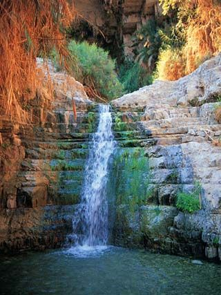 "En Gedi Israel.  ""Then David went up from there and dwelt in the strongholds at En Gedi."" 1 Sam 23:29"