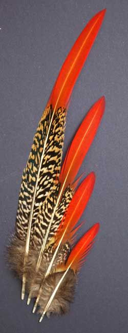 Am-Gold Pheasant | Am-Gold Tail Feathers | Classic Salmon Fly Tying Materials