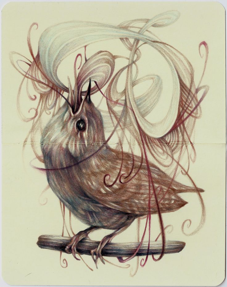 23 best Marco Mazzoni Birds and animals images on Pinterest ...