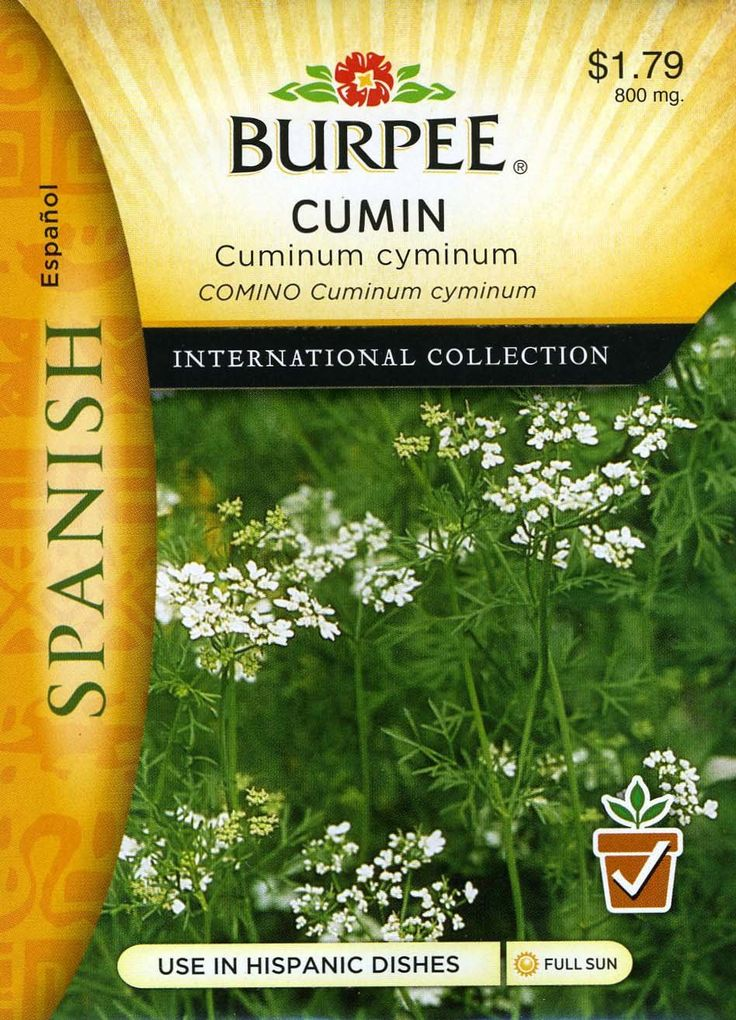 """Burpee 69653 Spanish - Herb Cumin Seed Packet. Use seeds as flavoring in Mediterranean and Mexican dishes, curries & chili powder. Annual. SOW in average soil in full sun in spring after danger of frost. Sow seeds thinly and cover seeds with 1/8"""" of fine soil. Firm lightly and keep evenly moist. Seedlings emerge in 10-21 days. Thin to stand about 3"""" apart."""