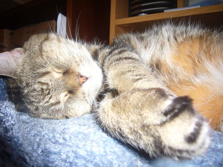 Sleepy Xena, purr, purr, purr.