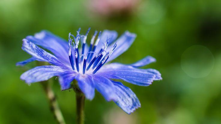 Flower by Ambar Elementals on 500px