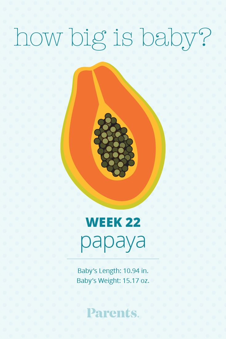 Your baby is the size of a papaya. Her lungs are developing rapidly, and they will begin making a protein called surfactant, which will help her breathe independently once she's born.