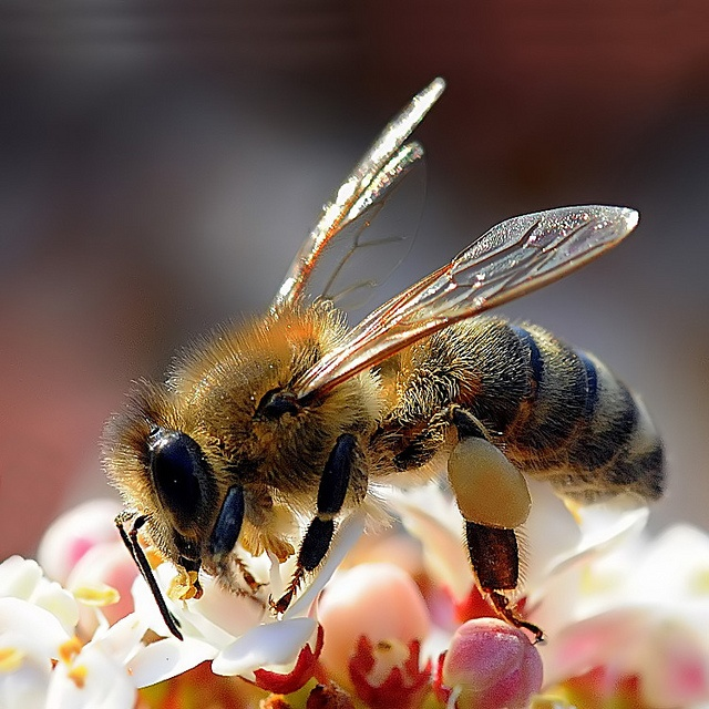 bee | photo pinned by Western Sage and KB Honey (aka Kidd Bros)