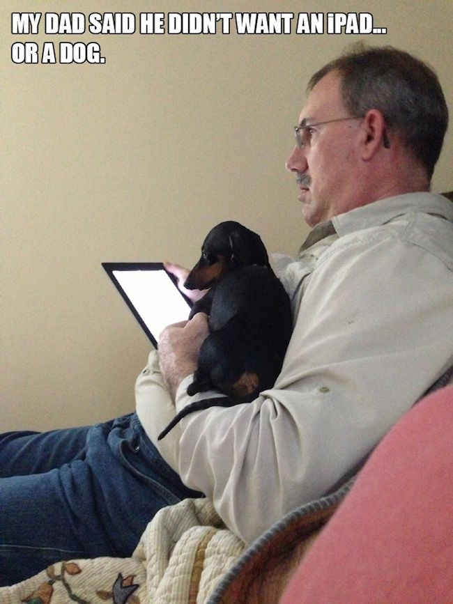 It Turns Out Dads Who Say They Don T Want Dogs Are Filthy Liars Pet People Pet Parent Dog Dad